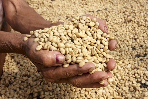 Coffee is Honduras' most important crop, accounting for more than a third of the country's agricultural output. Much of its production is excellent high altitude coffee; ideal for the specialty market. Photo credit: TechnoServe
