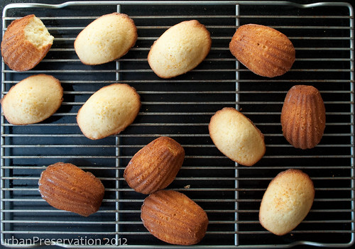 Madeleines_Finished