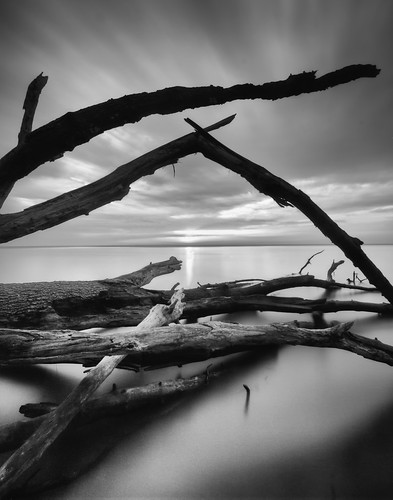 longexposure morning trees blackandwhite tree sunrise dawn decay maryland cliffs chesapeake chesapeakebay