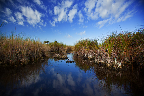 blue 2 sky cloud southwest water grass clouds digital canon way landscape photography eos landscapes photo alley kevin skies image flood florida d mark 5 south alligator dyer southern swamps swamp crocodile everglades mk2 5d tall ever plain f28 glade crocodiles alligators everglade mkii 1635 glades 1635mm swampland f28l