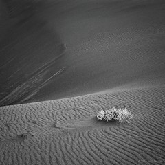 Winter - the Great Dunes