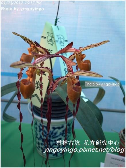 雲林古坑_花卉研究中心20120123_R0050687