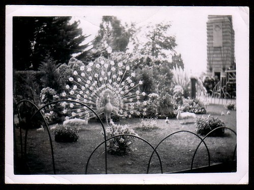 Adelaide Flower Show 1960 by bloomfield and george
