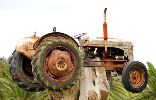 ciągnik rolniczy Rolnik |Fergie Ciągnik na pniu Waiuku|6775301611 4f3e295147