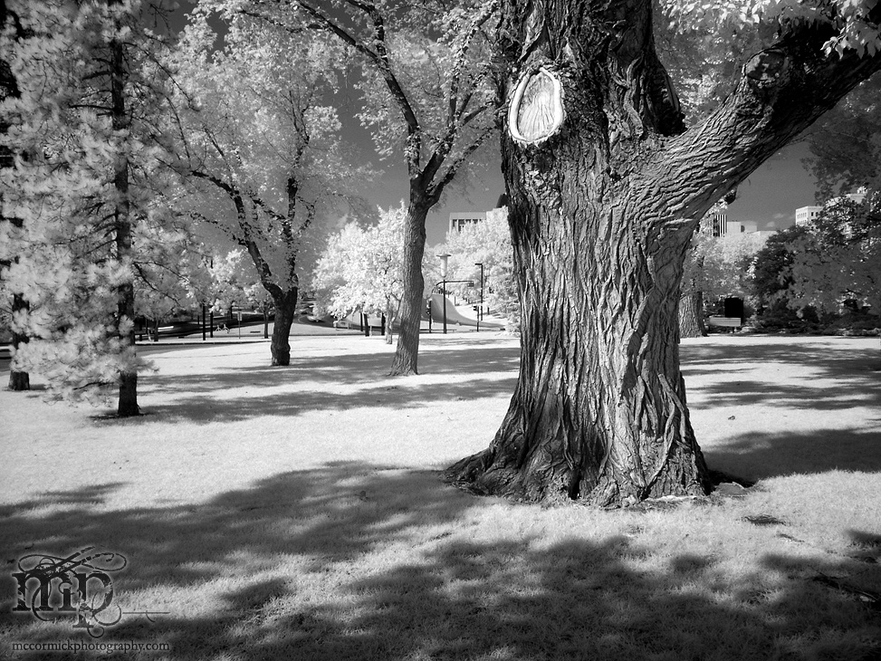 2003-08-04 Tree, Leg Grounds in Infrared