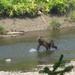 Bear 26