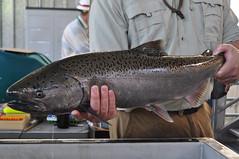 cod(0.0), fishing(0.0), recreational fishing(0.0), red snapper(0.0), tilefish(0.0), milkfish(0.0), animal(1.0), trout(1.0), fish(1.0), fish(1.0),