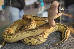 Rocky Mountain Reptile Expo
