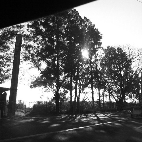 7/29: sun (peeking through the trees) #febphotoaday