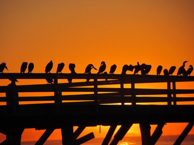 Paradise Cove pier at sunrise