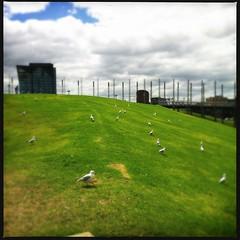 gulls on hill