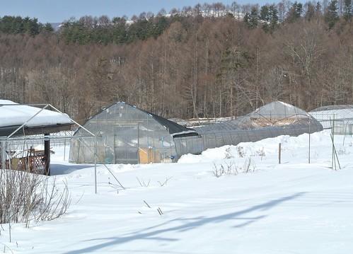潰れたビニールハウス 2014年2月24日 by Poran111