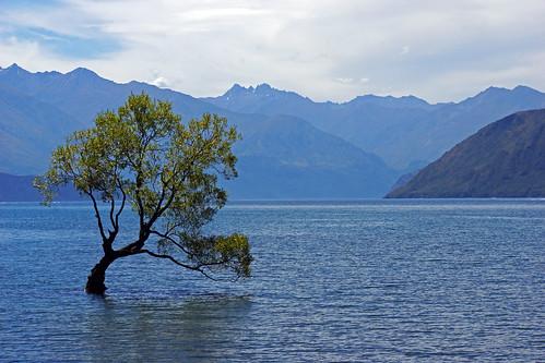 blue newzealand mountain lake tree green water berg see wasser otago grün blau wanaka baum lakewanaka neuseeland 2014 dorenawm nex7 renatedodell