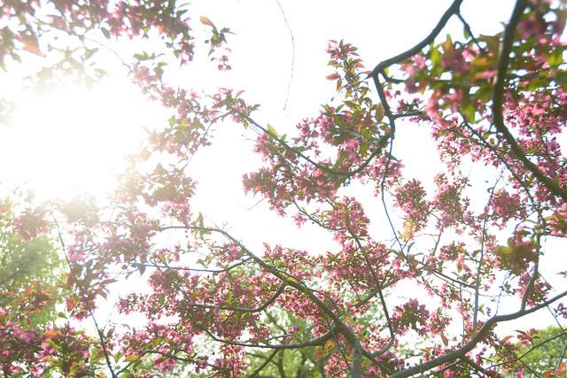 CrabApple Arboretum-12