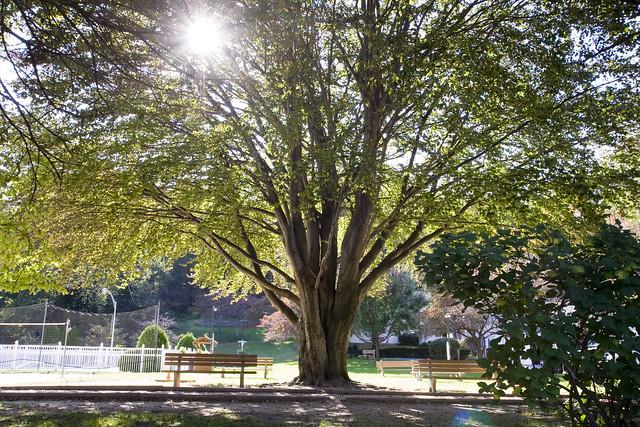 365.57 Tree