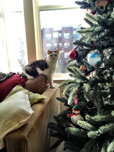 Tree climbing.
