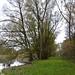 Gaißau Rheinholz (5)