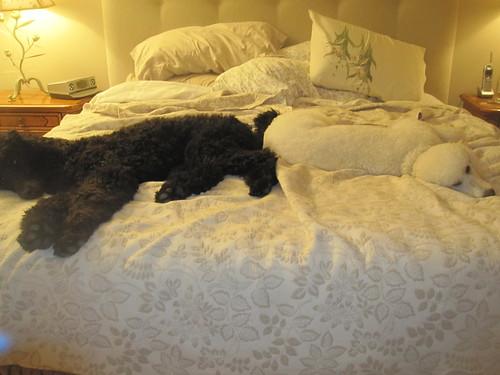 Dec 2, 2011 bedtime 002