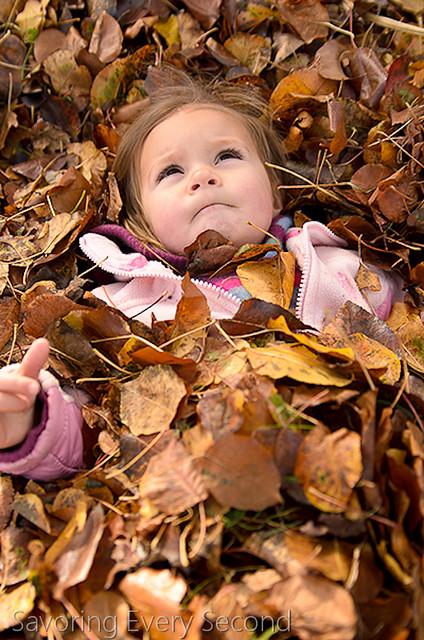 Fall Leaves42-Edit.jpg