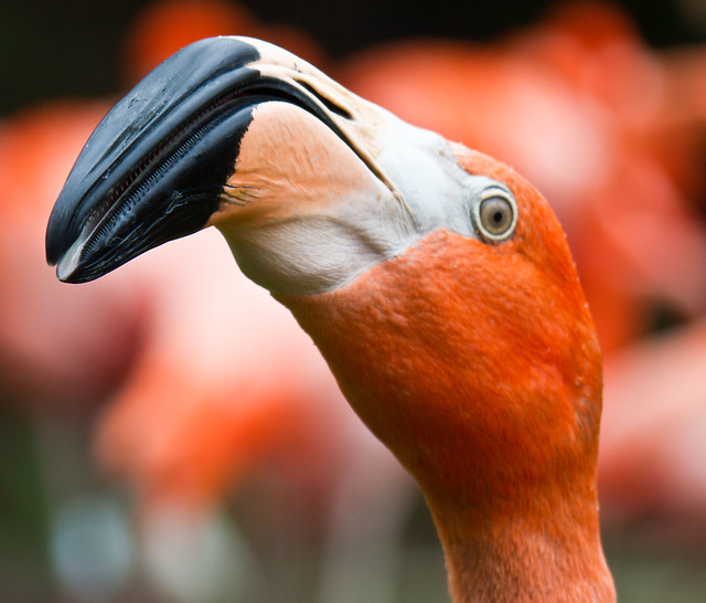 Eye-of-the-Flamingo
