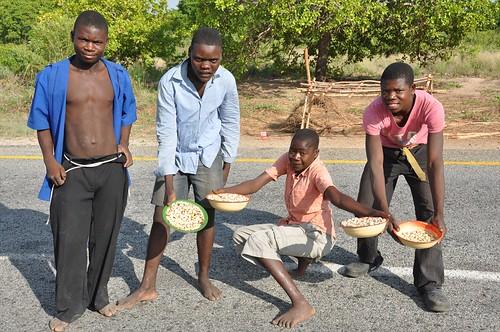 Cashew nut sellers