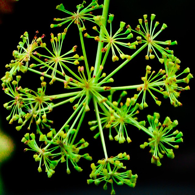 Fractal from Nature by Flickr user jacl_o_lantern