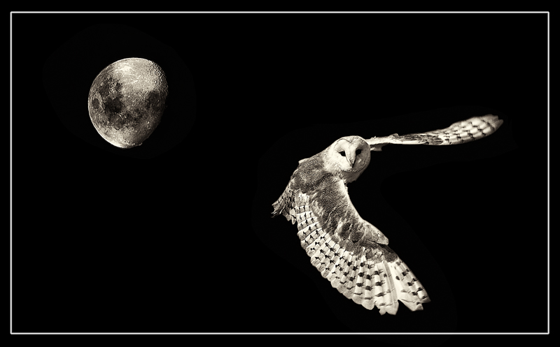 The Moon and the Owl — Digital Grin Photography Forum