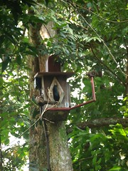 outdoor structure(0.0), flower(0.0), tree house(0.0), branch(1.0), tree(1.0), bird feeder(1.0), jungle(1.0),
