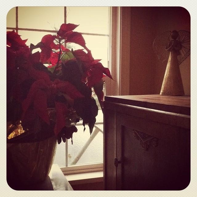 Quiet December morn