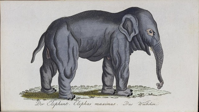 stylised sketch of elephant