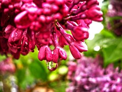 Victorian Garden_13