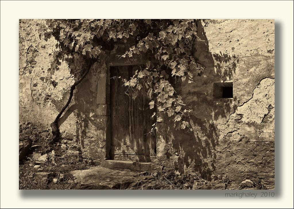 Old Door and Vine