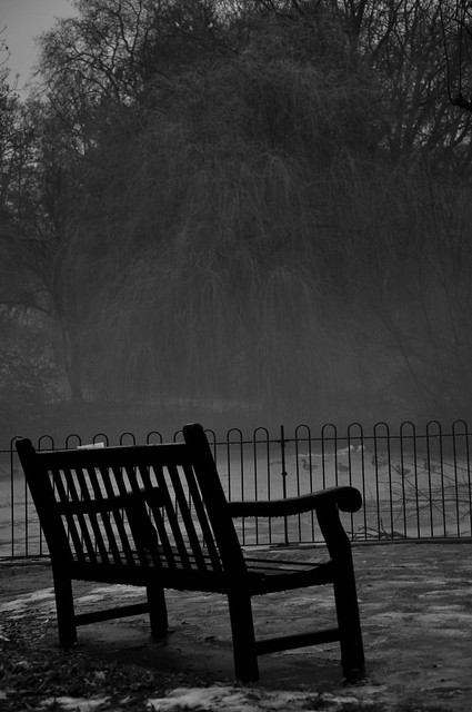 bench and willow in mist