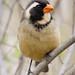 Argentina Birding Guide