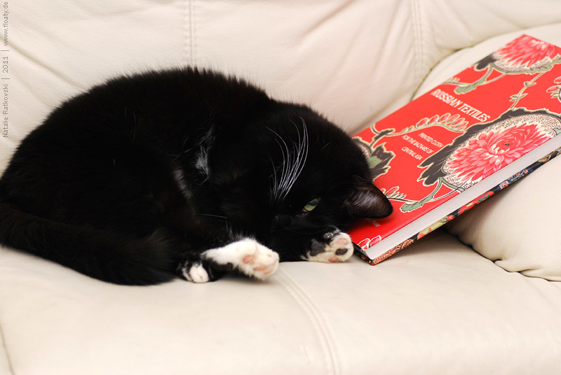Book-worm? No. Book-cat :-)