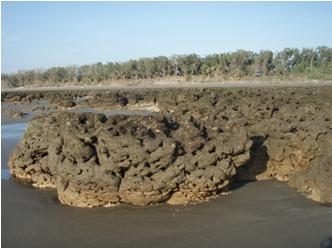 桃園觀音的藻礁(張睿昇攝)