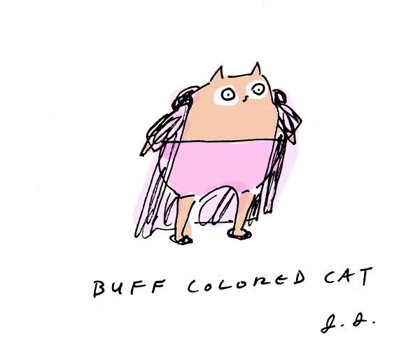 buff colored cat