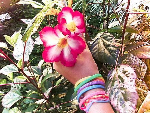 """309/365 """"Como la flor, como la flor"""". by LitoCG2"""