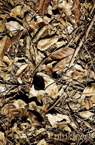 18-24Sep2011: Autumn by b0y_m3nth4