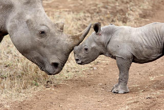 Rhino Baby & Auntie