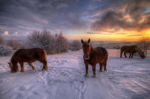 canon eos 7d sigma 1020mm hdr photomatix nature animal cheval horse neige snow france franchecomté montfaucon wideangle sky nuages clouds sunset coucher soleil sun prairie champs field meadow campagne philippesaire photo photography ciel
