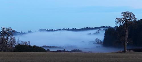 trees winter mist fog landscape evening bc farm vancouverisland