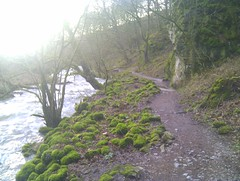 moss and light