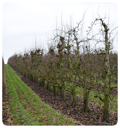 Orchards-Belgium