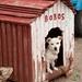 Bobos the Cretan Dog - Crete, Greece