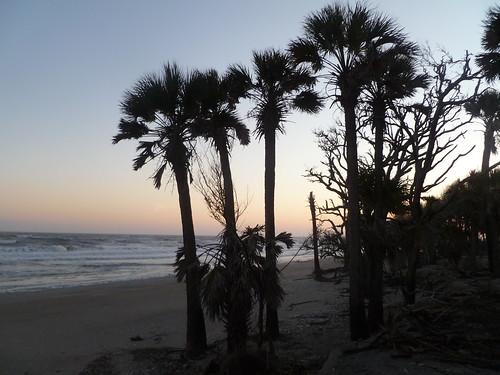 Botany Bay View (Edisto)