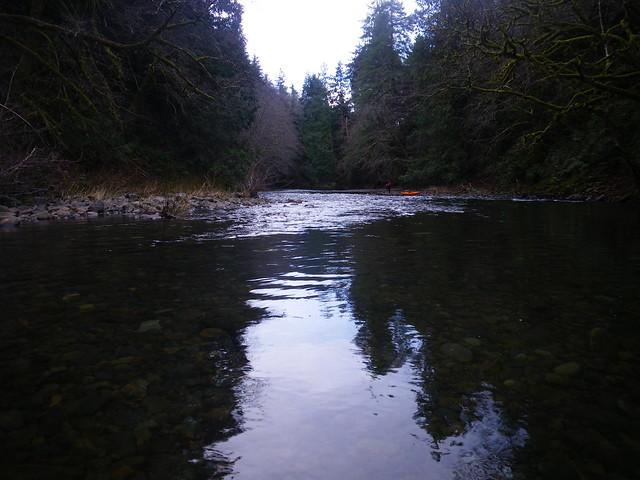 A nehalem river day red alder ranch for Nehalem river fishing
