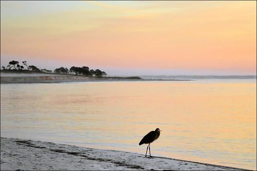 sunrise florida panamacitybeach standrewsstatepark standrewsbay greatheron floridastateparks nikond3100 nikkor70300afsvrlens