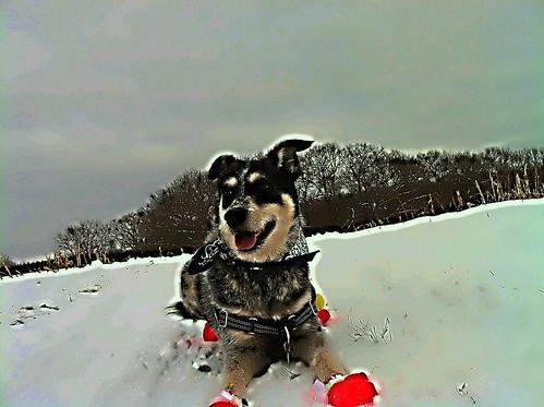 a snowdude