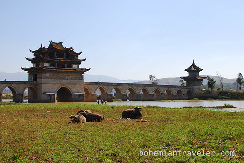 water buffalo and Dragon Bridge Jianshui Yunnan